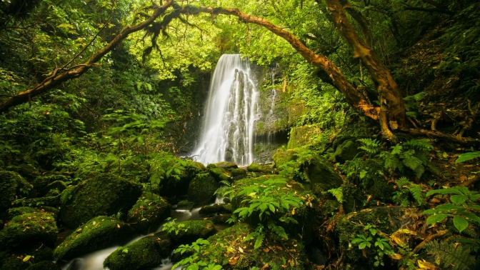 forest-waterfall-pictures